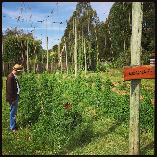 Learning about the finer points of hop growing.