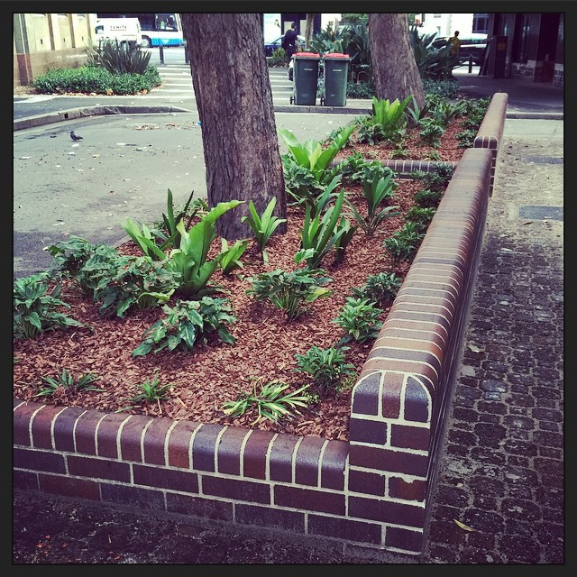 Today - mulch! I wish I could get the @cityofsydney to landscape my garden too. :)