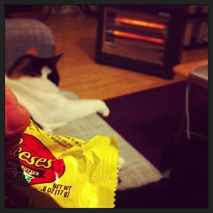 Things that are cheering me up tonight: Reese's PB egg, cats, and digging the heater out of the storage cupboard.