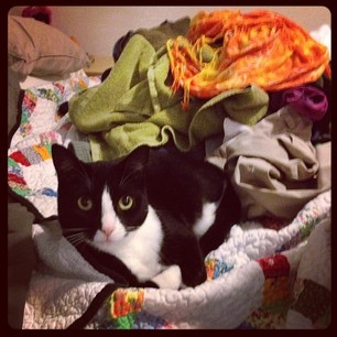 Petey's fave place to lounge is in piles of clean laundry. (Little turd.)
