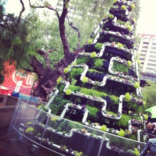 This year's Xmas tree in the Rocks is very cool: succulents planted in tubes!