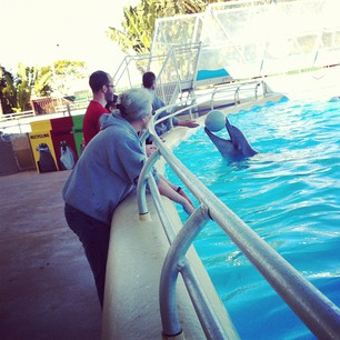 Playing catch with dolphins.