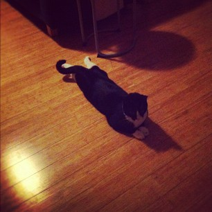 Petey sprawls. We think he likes to cool his harbles on the floor.