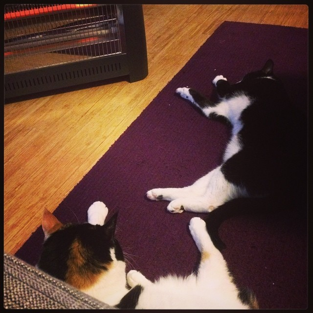 And now her foot is touching his tail! Such is the power of a radiant heater on a cold night.